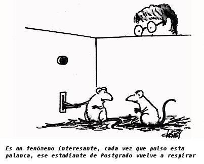 Rat Statistics